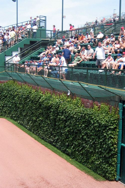 Blog #258 - Wrigley Field Ivy